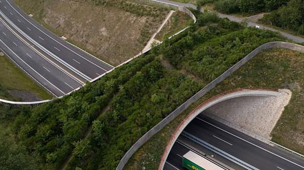 Animal-friendly highway over-cross